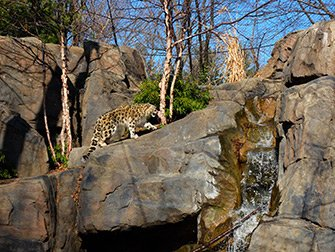 Central Park Zoo Tickets - Snøleopard