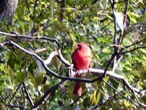 Gratis Bird Tour i New York