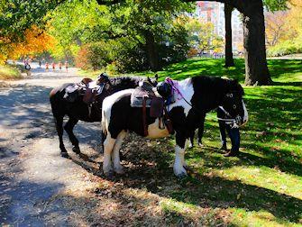 Horseback Riding i Central Park - Hestene