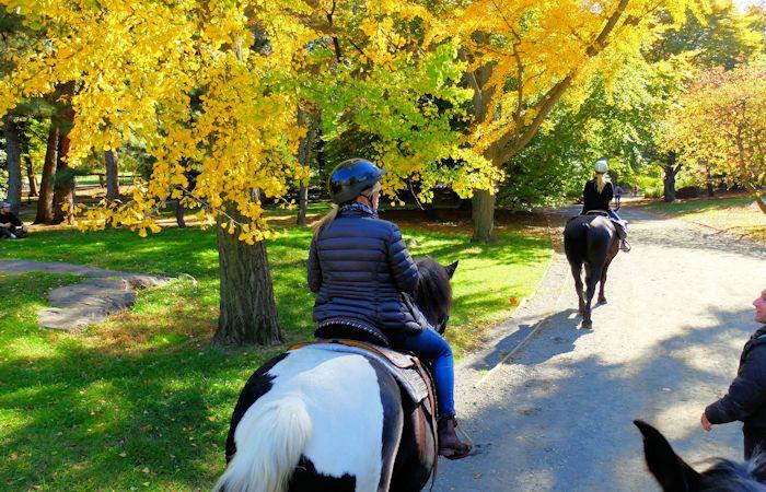 Horseback Riding i Central Park - Ridning