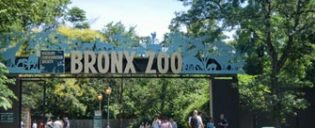 Bronx Zoo i New York